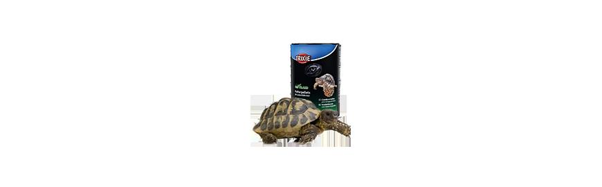 Karmy dla żółwia